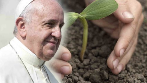 pope francis with plant